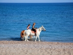 Horse Riding Tour in Southern Island
