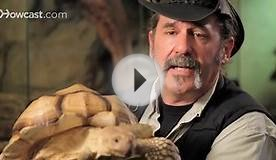 7 Cool Facts about Sulcata Tortoise | Pet Reptiles